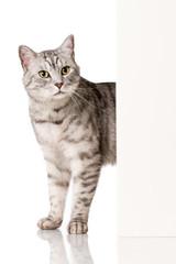 Katze schaut ums Eck