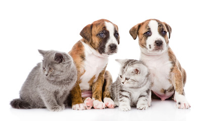 Group of cats and dogs sitting in front. isolated on white backg
