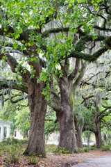 Savannah Oaks