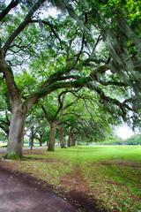 Savannah Oaks