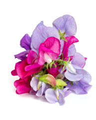 sweet pea blossoms isolated on white