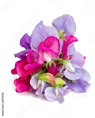 Fotobehang Lilac sweet pea blossoms isolated on white