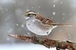 Bird In Snow
