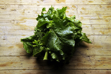 Brassica rapa sylvestris 순무 Turnip greens لفت