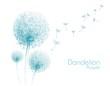 flower dandelion sketch