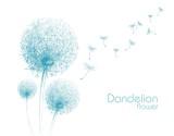 Fototapety flower dandelion sketch