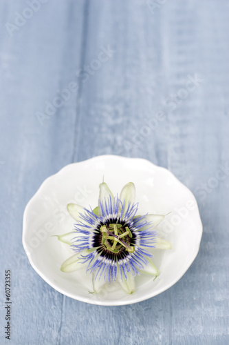 canvas print picture Blaue Bluete der Passionsblume auf Holzplatte