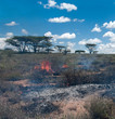 Wildfire in African savanna - 60723949