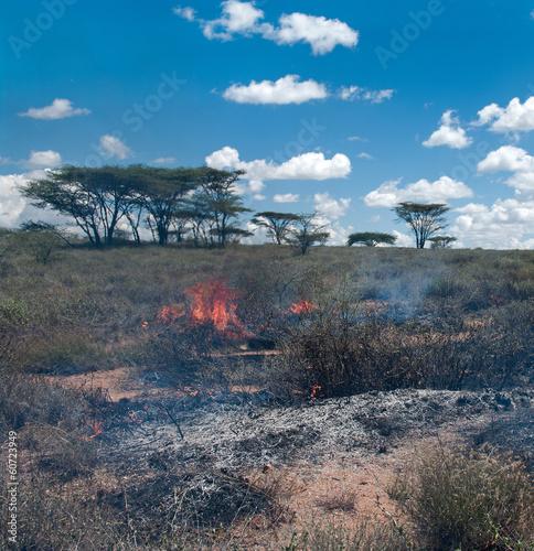 Wildfire in African savanna - 60723949