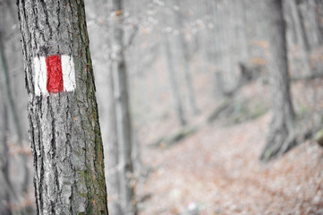 Red band sign on a tree