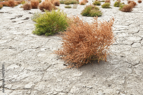 succulents growing on cracked earth