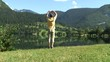 Mann macht Entspannungsübungen an einem Bergsee