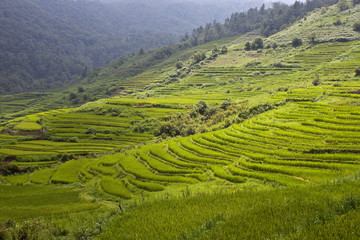 Paddy fields in northern Vietnam