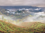 Spring fog in mountains of southwestern China, rice terraces, fa poster