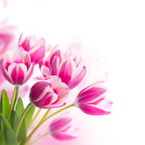 Fototapety Red tulips with green grass. Floral background.