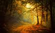 Leinwandbild Motiv Autumn in the forest