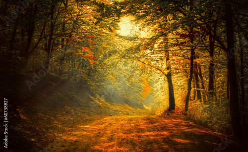 Spoed canvasdoek 2cm dik Landschappen Autumn in the forest