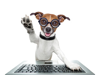 silly computer dog