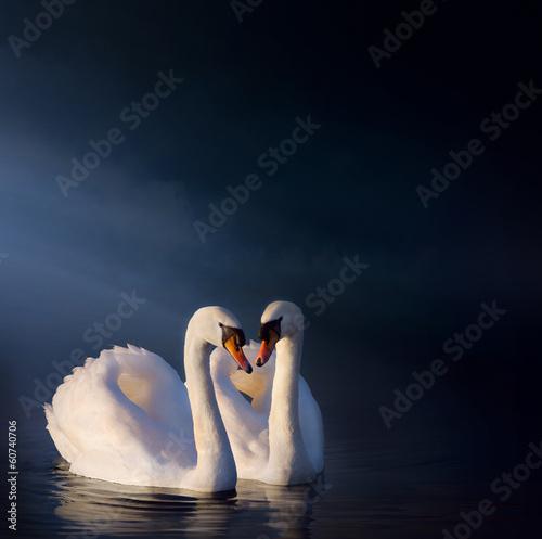 Papiers peints Cygne art Romantic swan couple