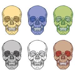 Human Skull Set