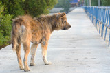 Abandoned stray dog on the road. - Fine Art prints