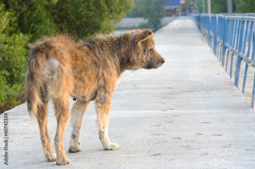 Abandoned stray dog on the road.