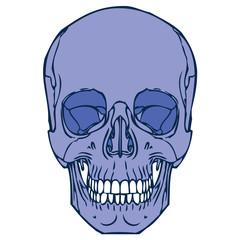 Human Skull 02