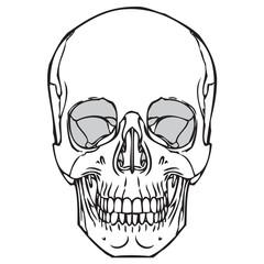 Human Skull 05