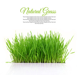 Fresh green grass with copy-space isolated on white background