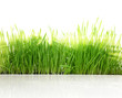 Fresh green grass with sun-rays isolated on white background