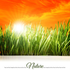 Peaceful background with grass, orange sky and sunlight