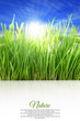 Happy vertical background with grass, blue sky and sunlight
