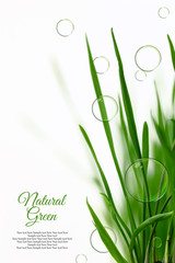 Few blades of grass with floating soap bubbles isolated