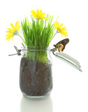 Glass jar with soil, grass with flowers and butterfly