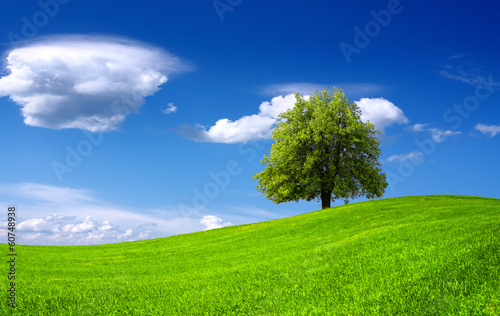 Nature green landscape