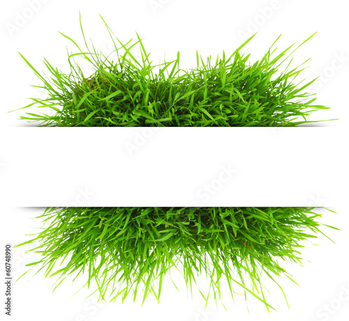 Foto op Plexiglas Lente Natural banner with fresh grass isolated on white background