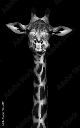 Tuinposter Zuid Afrika Giraffe in Black and White