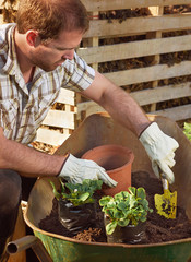Man gardening, transplanting and potting plants