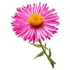 Pink chrysanthemum flowers mesh