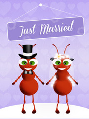 Wedding of ants