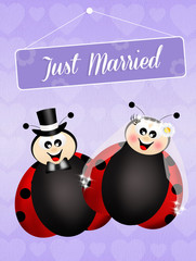 Wedding of ladybugs
