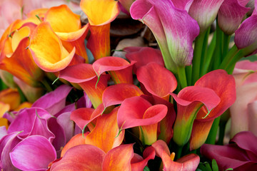 Bouquet of beautiful callas lilies.