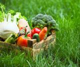 Fototapety Fresh vegetables in the box