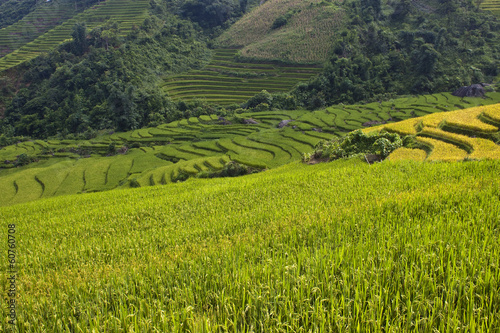 Paddy fields in mountains of northern Vietnam