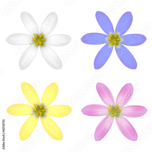 Set of Six Petal Flower. Vector illustration