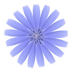 Blue flower. Photo-realistic vector.