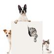 Zwei Hunde und zwei Katzen