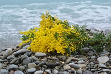 8 marzo in riva al mare