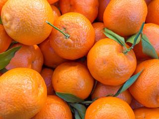 Mandarini (Citrus reticulata)