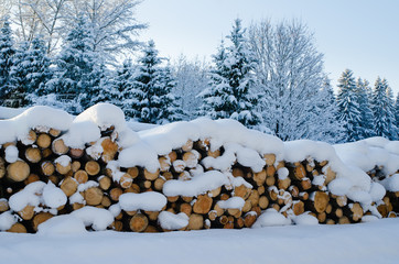 Trunks of felled trees and stacked pile